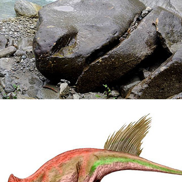 Schädel eines Liaoceratops
